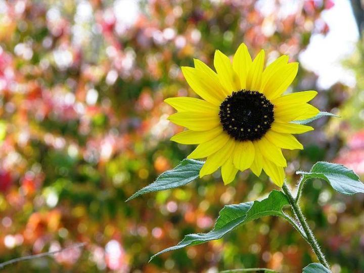 2013-02-10-08-50-57-la-vita-il-fiore-per-il-quale-lamore-il-miele
